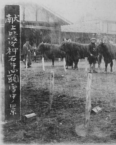 広島県産牛のルーツは神石高原にあり