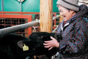 神石牛の育成