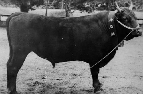 神石牛の画像